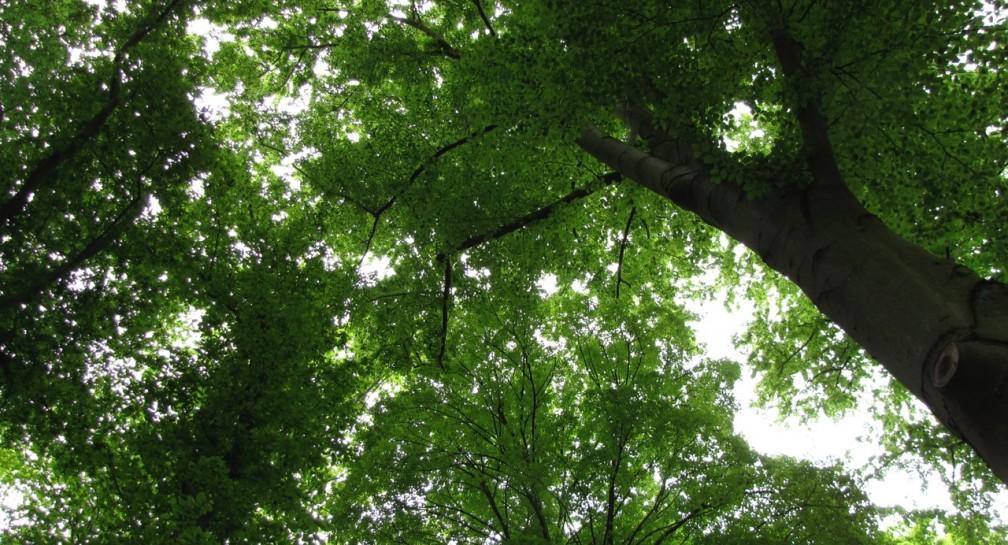 Baumfällungen rechtzeitig öffentlich machen image